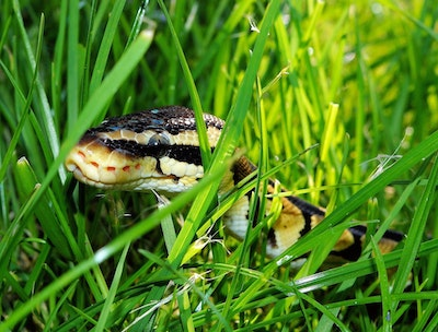 01 09 Snake In The Grass