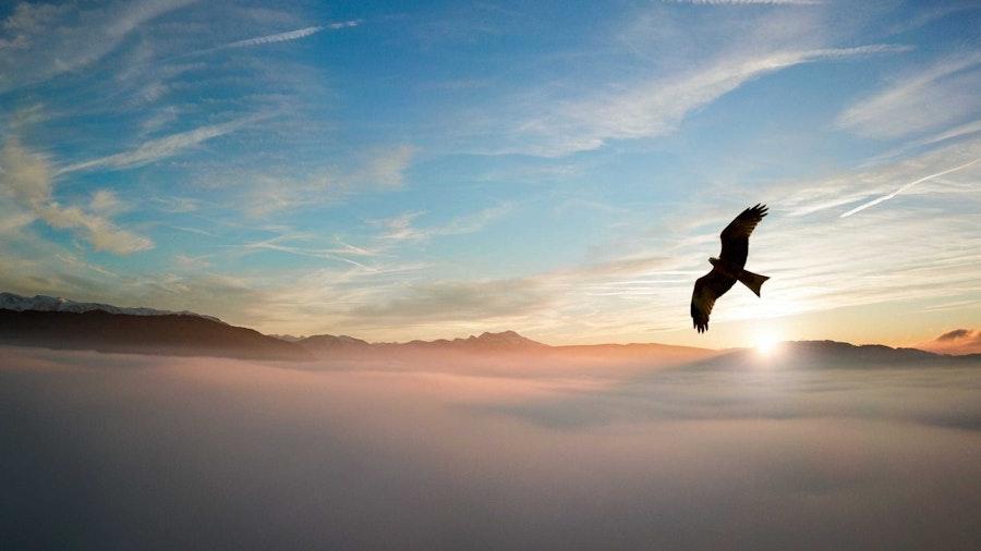 01 24 Eagle