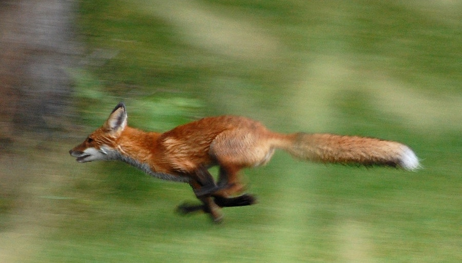 01 26 Fox