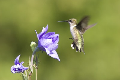 02 24 Hummingbird