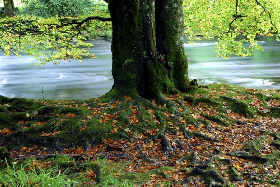 05 26 Tree By Stream