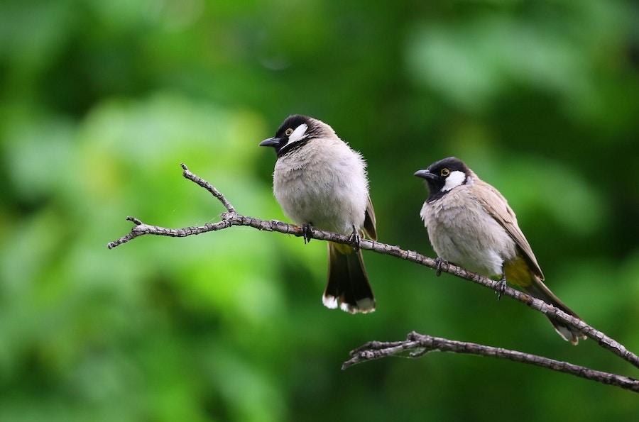 08 03 Birds