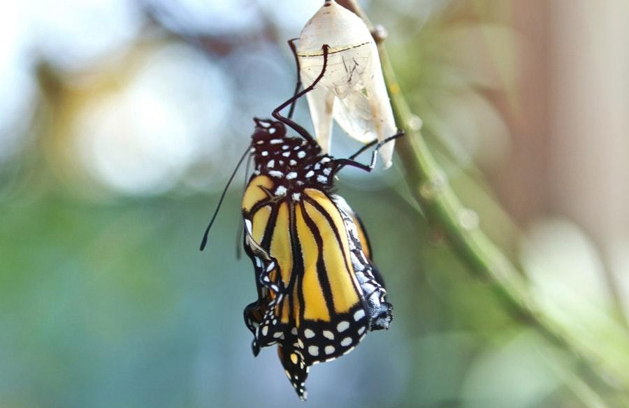 10 09 Butterfly