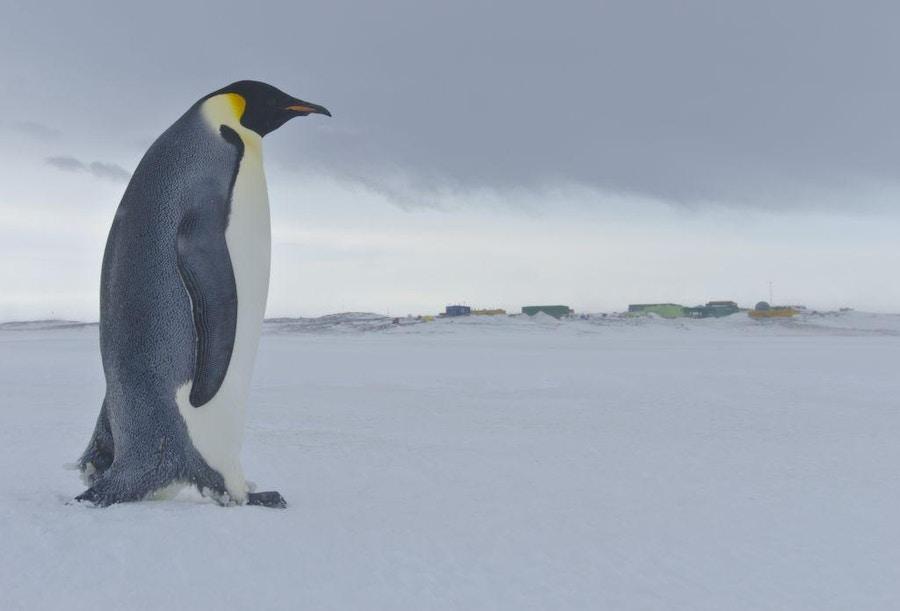 12 18 South Pole