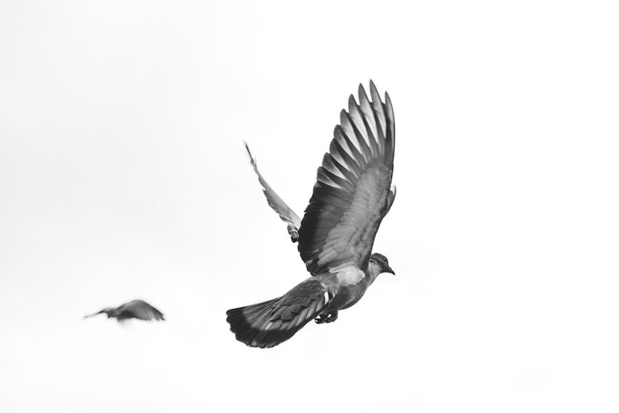 Bird mid flight