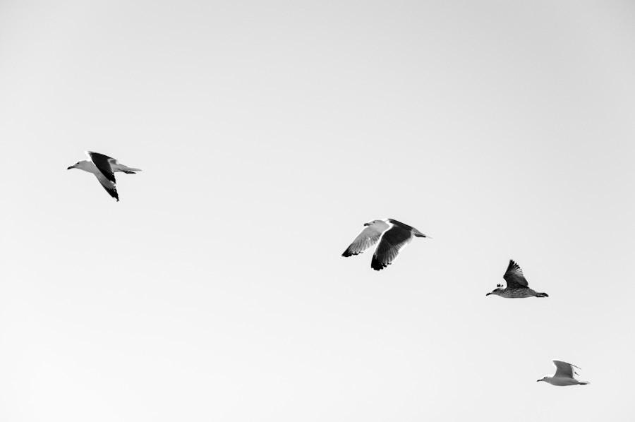 Birds Simplicity