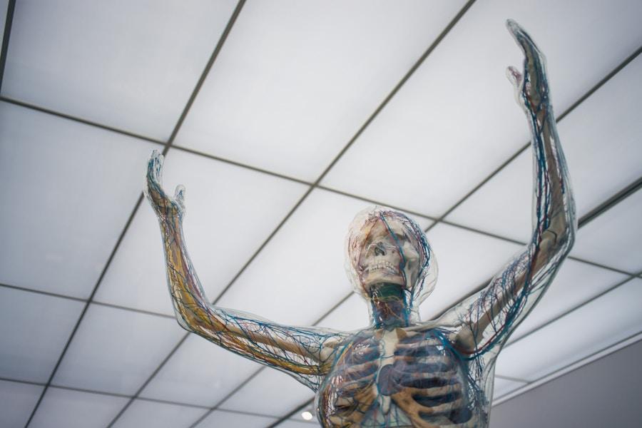 Medical Skeleton