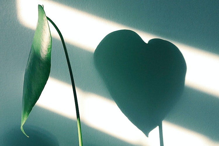 Plant heart shadow