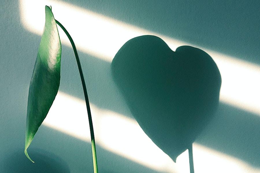 Plant heart shadow