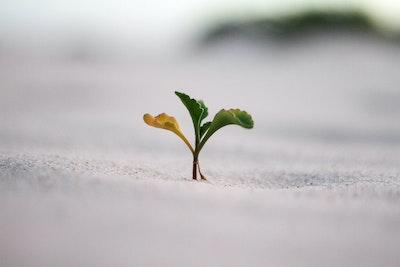Plant in desert