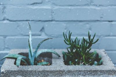 Plants In Cinderblock