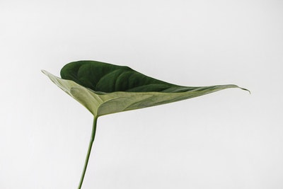 Simple Single Leaf