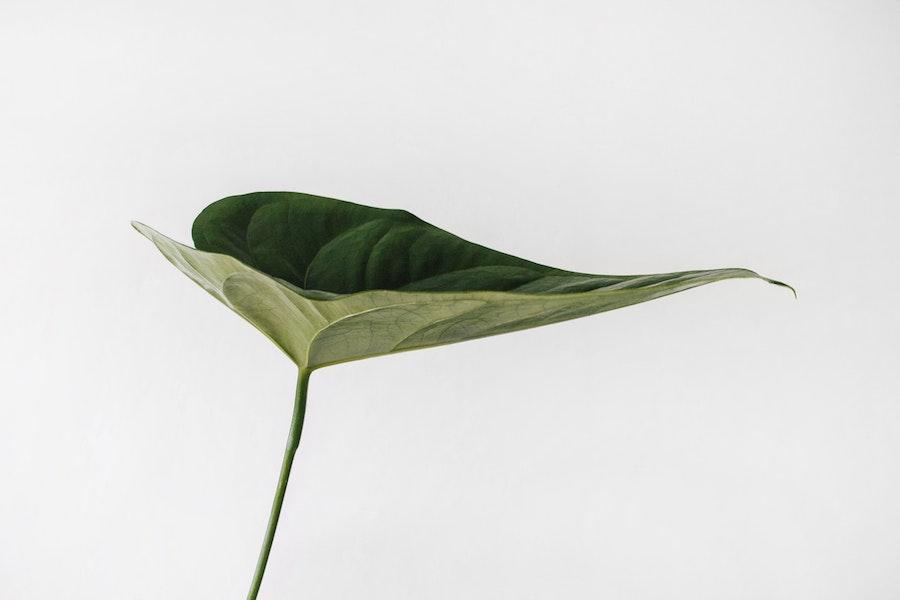 Simple Single Leaf
