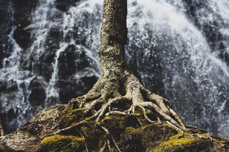 Tree Roots Waterfall