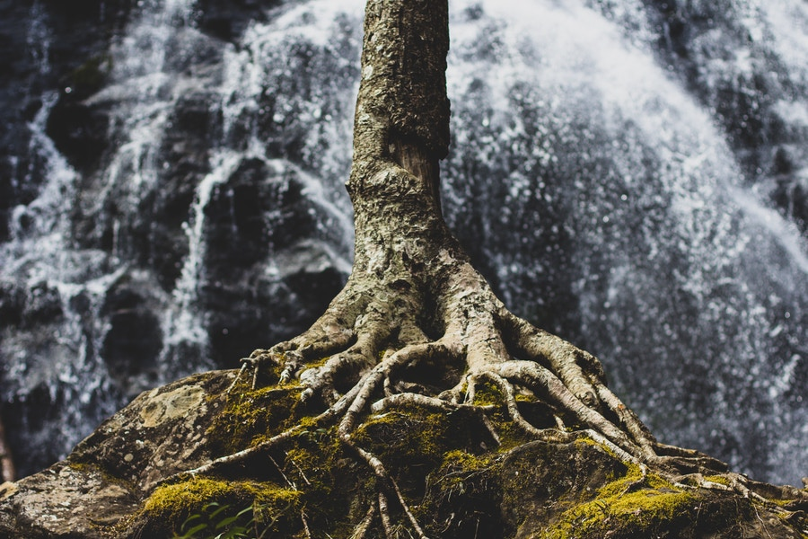Tree Roots Waterfall